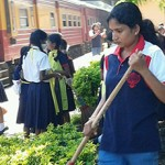 Private School in Sri Lanka Introduces Hinokishin as a School Activity